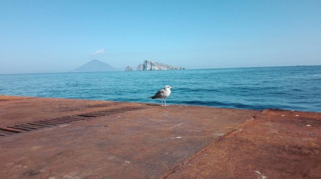 Il gabbiano e lo Stromboli