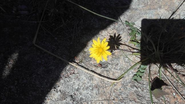 Il buio insidia la bellezza di un fiore